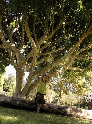 Treepose